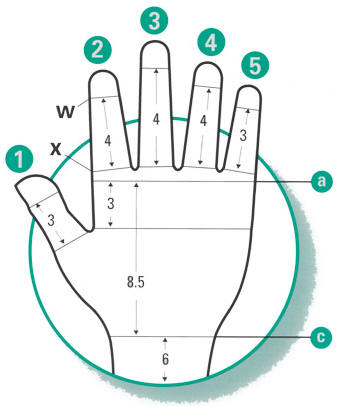 Juzo Gauntlet and Glove Measuring Diagram